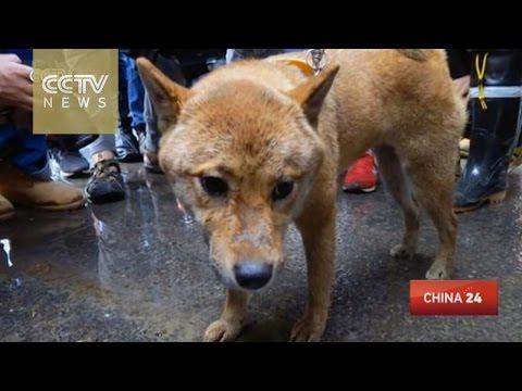 A dog miraculously survives Taiwan earthquake