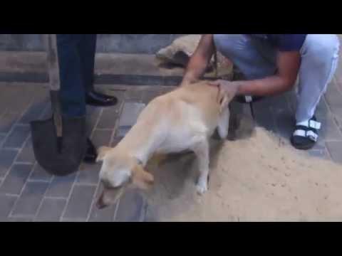 Спасение собаки замурованной рабочими. Воронеж