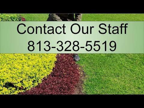 Lawn Spraying St Petersburg FL - Appointment at - 813 328 5519