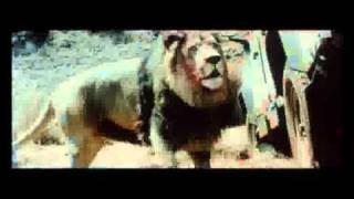 Shikar the Lion.swf