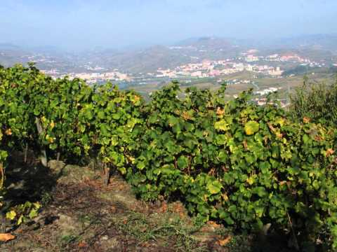 Vinhedos do Douro-23.10.2010