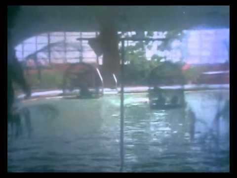 Oru Poonga Vanam - Karthik, Nirosha - Ilaiyaraja Hits - Agni Natchathiram – Romantic Song