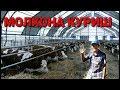 Мол БОКИШ БИЗНЕСИНИ БОШЛАШ 300 млн сум mp3