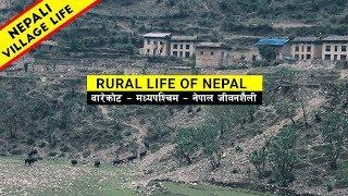 Village Life of Nepal | Beautiful Life of Barekot Nepal |  IamSuman