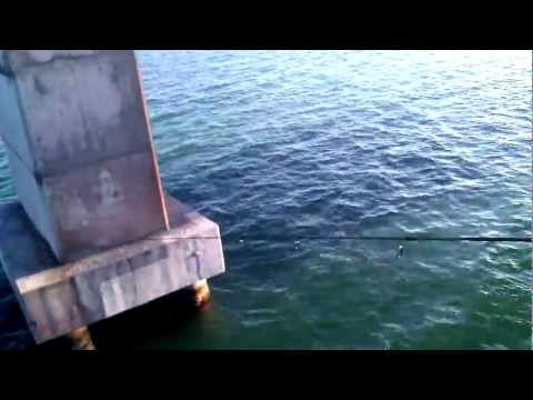 Florida Keys Fishing Adventure 5/20/2012