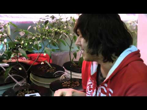 How To Hydroponics   S02e08 Superthrive, Dwc, H2o2 &amp  Solar Oh My