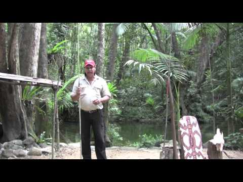 Secrets of the Daintree Rainforest Queensland Australia with Aboriginal Guide