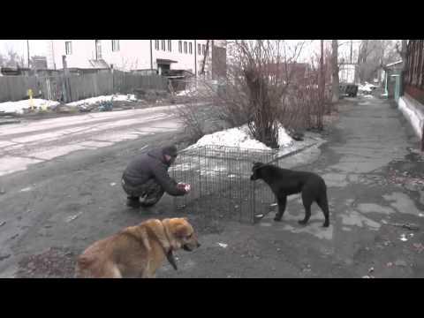 Ловля и отправка собак по адресу.
