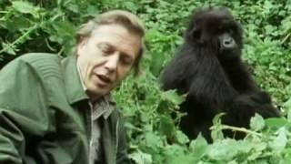 Sir David Attenborough - The story behind Life on Earth - BBC