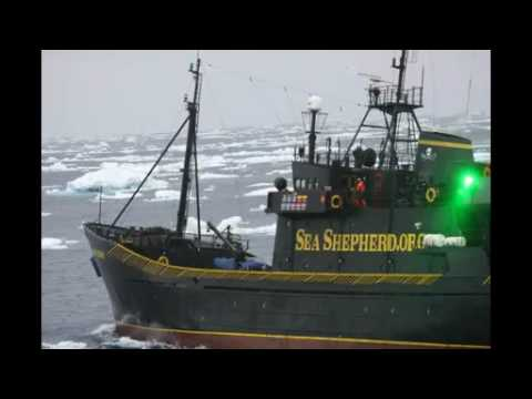 Sea Shepherd Attacks Japanese Whale Research Vessel