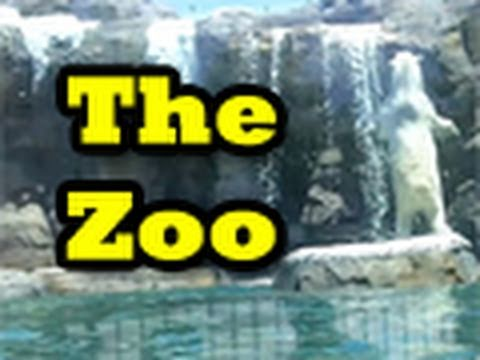The Nive Nulls Visit The Zoo