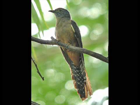 'The Cuckoo' ~ John Renbourn