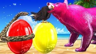 Learn Colourful Bear Take Tha Python Eggs  Learn Colous Song for Babies || 3D Top Nursery Rhymes