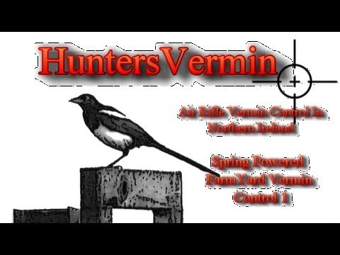 Air Rifle Hunting. Spring Powered Farm Yard Vermin Control 1/ July 2012