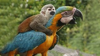 FUNNY PARROTS || Funny BIRD Videos Compilation