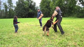 5 YEAR OLD YEAR OLD GETTING PROTECTED BY HER GERMAN SHEPHERD FROM 2 BAD GUYS .