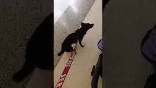 Dog on Duty