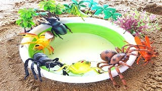 Beach Fun Playime Insects and Bugs for Kids Learning Toy Videos For Children Babies Toddlers Kids