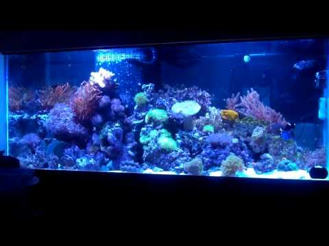 First thoughts on kessil a150w ocean blue