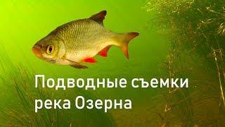 Подводные съемки в речке жизнь рыб в небольшой речке России.