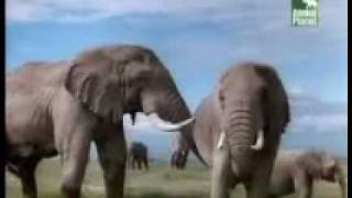 Animal Planet al Extremo asesinos 3-5.flv