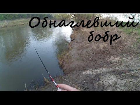 бобр бай рыбалка