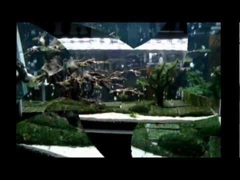 Ao Ca Doi Cho   Duong Ngoc Thai - Tyh video