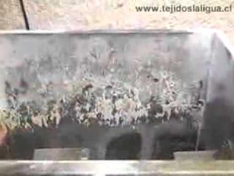 Denominacin de origen para Dulces de La Ligua   TVN