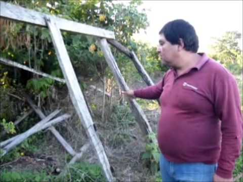 COOPERATIVA GRAN BORREGO (MPIO CHICONTEPEC VER.)