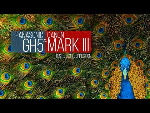 Color Correction test and Video Test HD Canon MARK III & Panasonic GH5