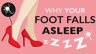 Why Does Your Foot Fall Asleep?
