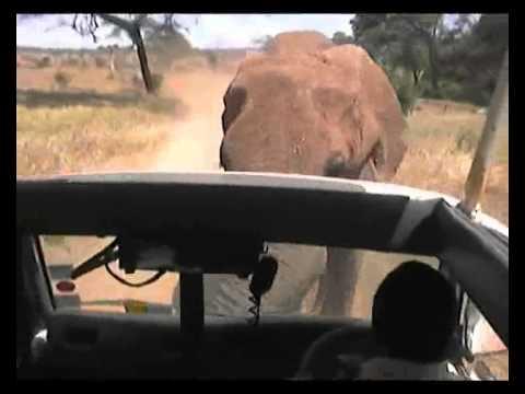Elephant attack in Kenya