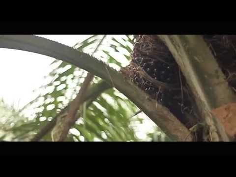 Short Film RAYA 2013 'AKU ANAK FELDA'