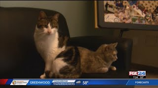 Purina Presents: Three Muscateer & Catamello in Pet of the Week
