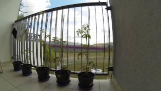 TL Konotopska Balkon All day 4dni 5962szt 60s 4dni szybkie