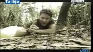 Video clip Tìm hiểu về nọc độc của các loài rắn trên thế giới - Khoa học vui