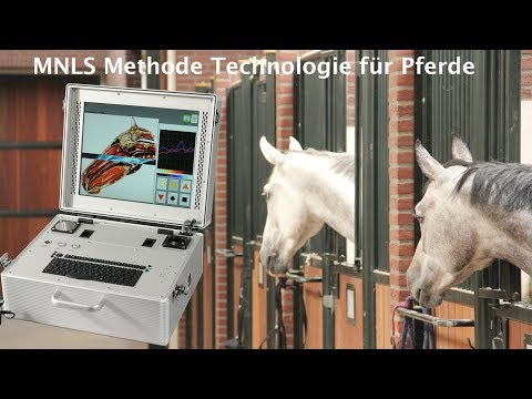 Biophotonen Technologie für Pferde