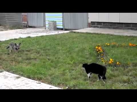 Gatos - Gato vs perro