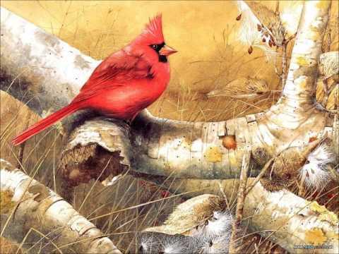 Bulutsuzluk Özlemi - Boyalı Kuş