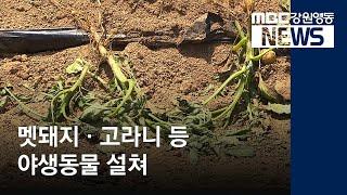 R)순환수렵장 운영에도 야생동물 피해 여전