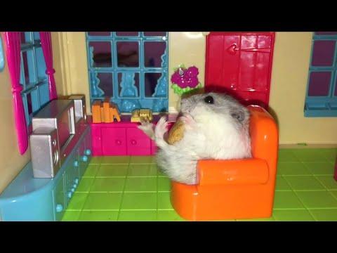 ТОП 5 Лучшие ВИДЕО ПРО СМЕШНЫХ ХОМЯКОВ. Top 5 funny video about a hamster.