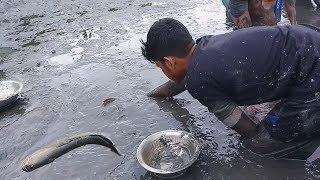 Common Fishing Video- People natural Fresh fish catching by hand in Mud water