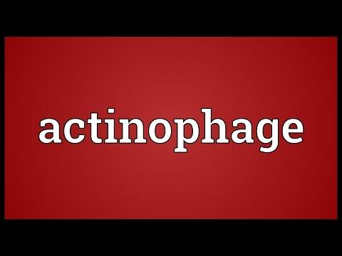 Header of actinophage
