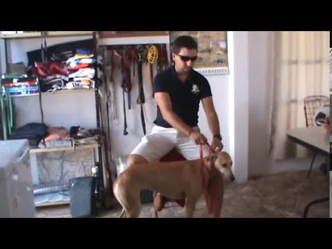 10 mejores agarradas de los Galgos de Diego Batista (Parte 1)