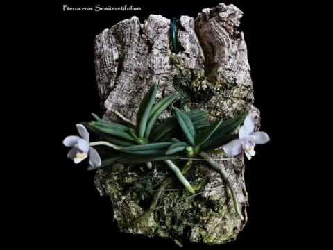 Micro-Orquídeas