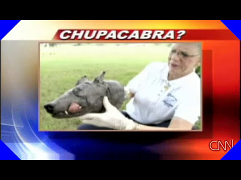 Chupacabra , South Texas, Police Video ( CNN)