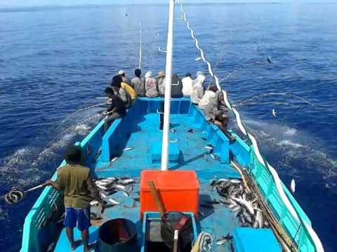 Mancing Ikan Mancing Ikan Cakalang Inkamina