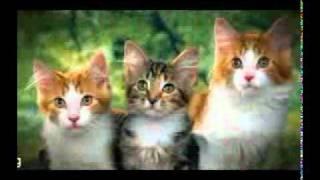 کلیپ زیبا از سینهای دختران و استفاده گربه درآنها