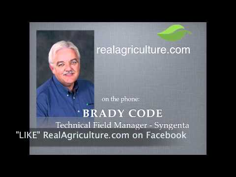 Should you Spray Corn or Plant Soybeans? - Brady Code - Syngenta