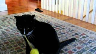 Lolita the cat playing with her favorite toy
